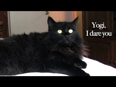 кот знакомств