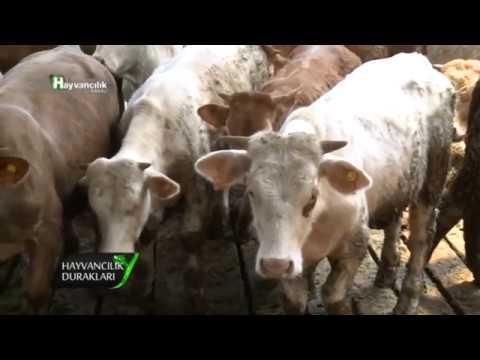 Hayvancılık Durakları Ankara Temelli