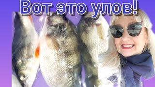 Рыбаки поделились уловом Чудо Окуни Весна Рыбалка удалась Днепр