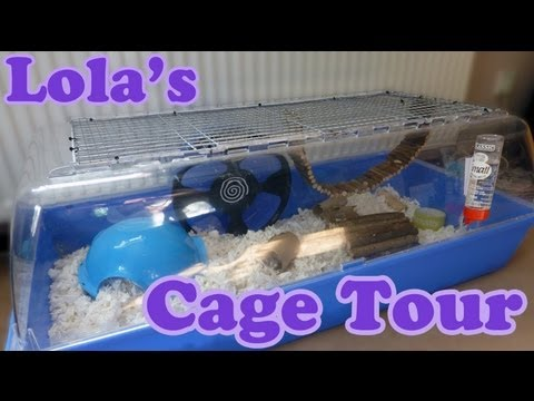 syrian-hamster-cage-tour---lola's-cage-summer-2013