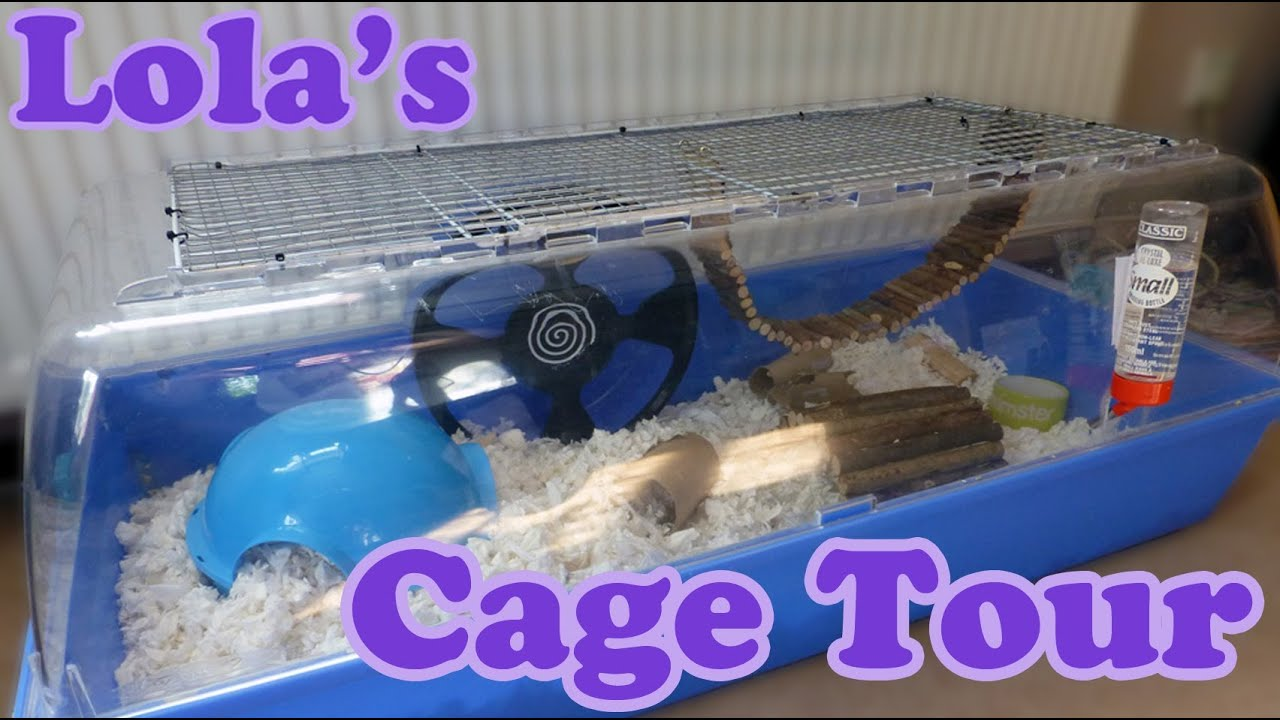 animals that start with a syrian hamster cage tour lola s cage summer 2013 14180