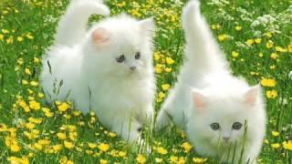 قطط جميلة جدا جدا جدا