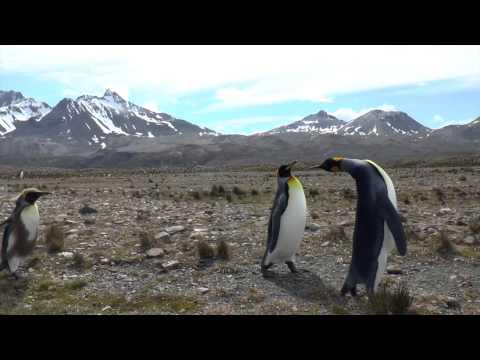 Falklands, South Georgia, Antarctica 2014