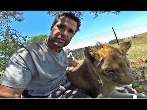 lion-whisperer:-what-does-a-lion-feel-like?