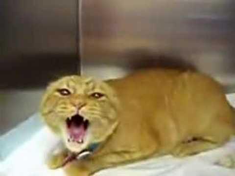 crazy mad cat - YouTube
