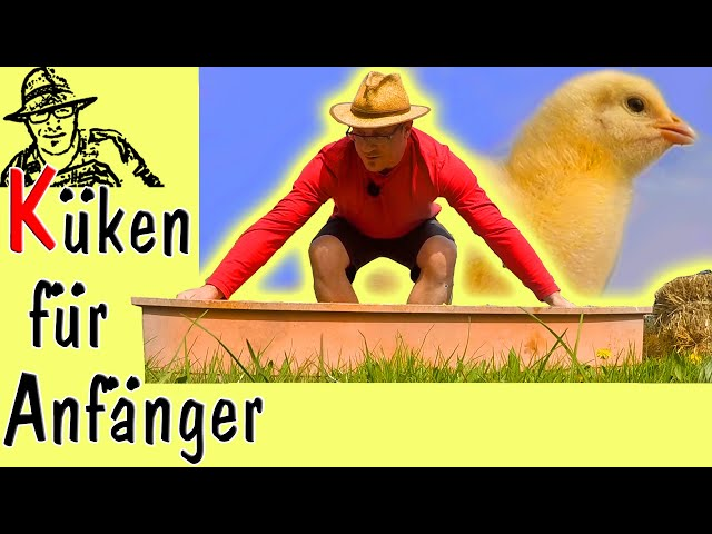 Küken selber aufziehen und Hühner im eigenen Garten - ideal für die Selbstversorgung