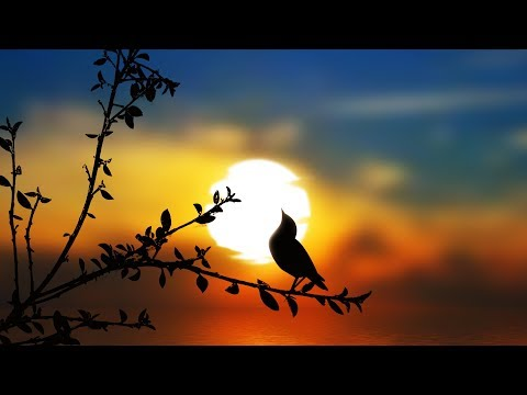 "Peaceful Music, Relaxing music, Instrumental music ""The Wondrous Earth"" by Tim Janis"