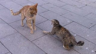 Cats fighting for no reason.