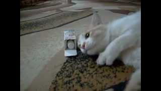 Кот и валерьянка.avi