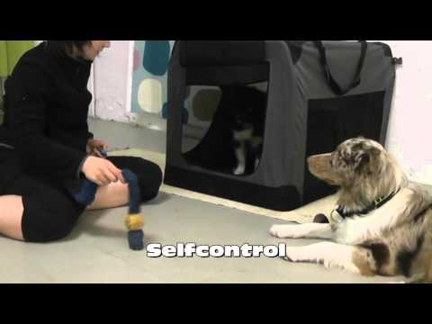 Crate Games aussie puppy Astra 12 weeks