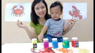 Sea Animals Paint and Coloring with Magic, Educational activitiy for kids