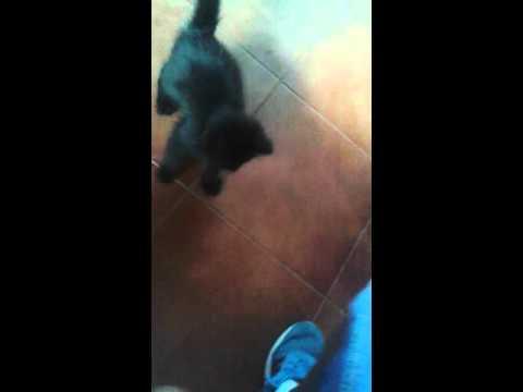 Gatito Encantador - cover