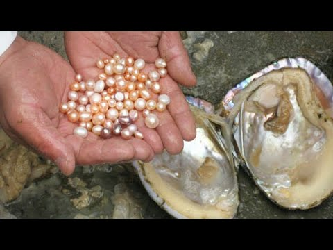 Wonder Videos!!! Beautiful Natural and Original Pearls Finding From Oyster