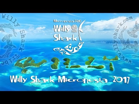 Willy Shark Micronesia 2017