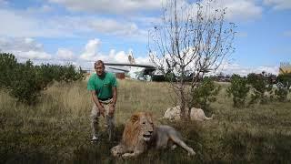 Чук с гаремом львиц идет на завтрак !