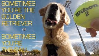 Gopro Golden Retriever  – The Great Tennis Ball Chase