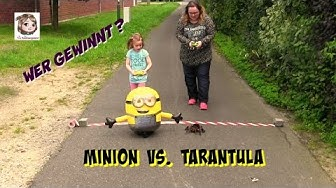 MINION VS. TARANTEL - das große Wettrennen ♥ Wer fährt als Erster durchs Ziel und gewinnt?