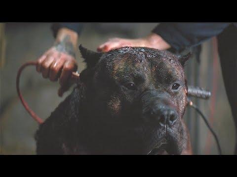 狗狗被冷血主人电击后,从此仇恨人类,见人就咬