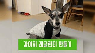 [미싱/재봉틀]강아지 래글런티 만들기 / 강아지옷만들기…