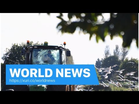 World News - Commercial transactions, Britishness and the bird flu-the Norfolk farmers outline of t