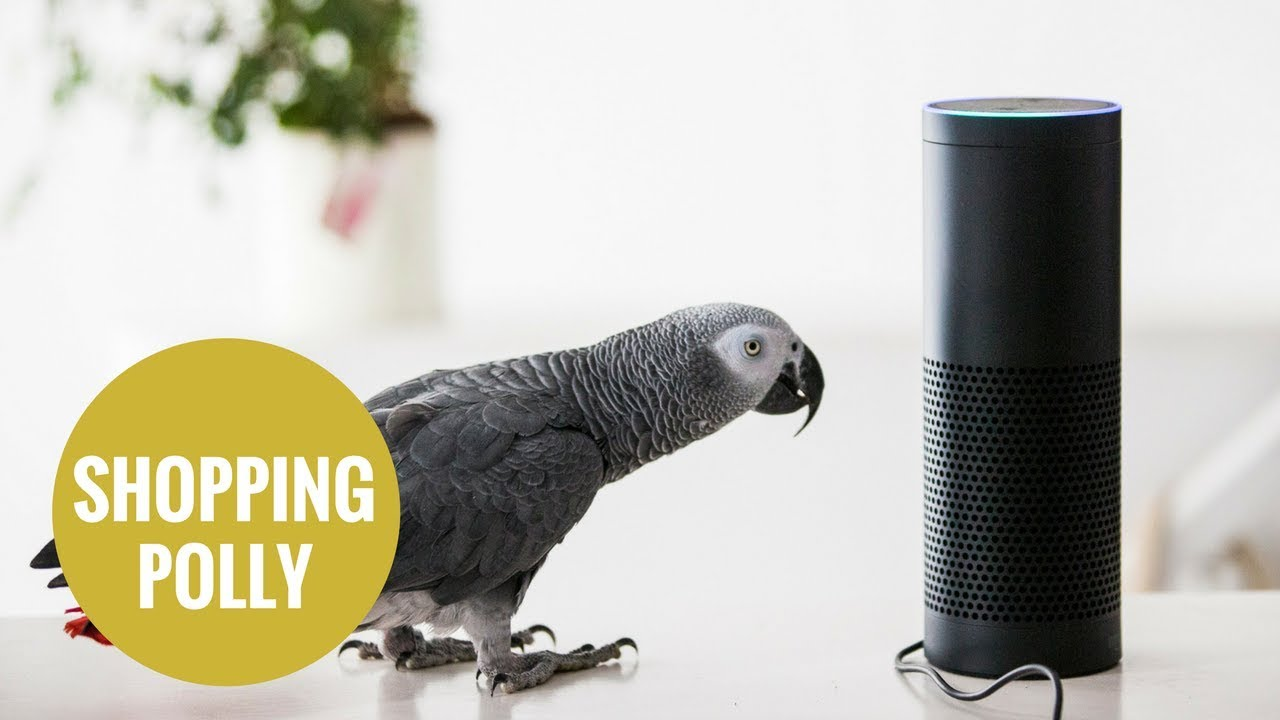 Why You Should NEVER Buy an Amazon Echo or Even Get Near One | naked