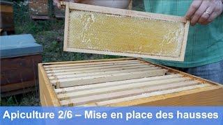 L'apiculture bio au cours de l'année – Mise en place des hausses (partie 2/6)
