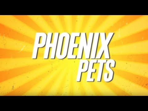 Pet Friendly Places | Phoenix Pets