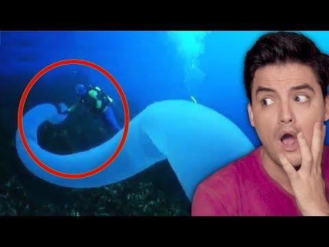 5 FENÔMENOS DO OCEANO que você não vai acreditar