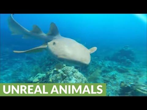 Persistent Shark Pesters Lionfish Hunter For Food