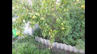 огород  (обзор, где и как всё посажено, работа весной) Часть1-я