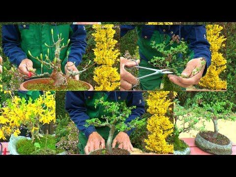 Bonsai Vielfalt Der Kleinen Bäume Mit Detlef Römisch Erleben