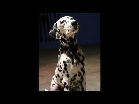 Dennis DeYoung 101 Dalmatians The Musical  Be A Little Bit Braver
