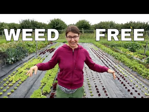 Never Weed Again!  Our Landscape Fabric Explained