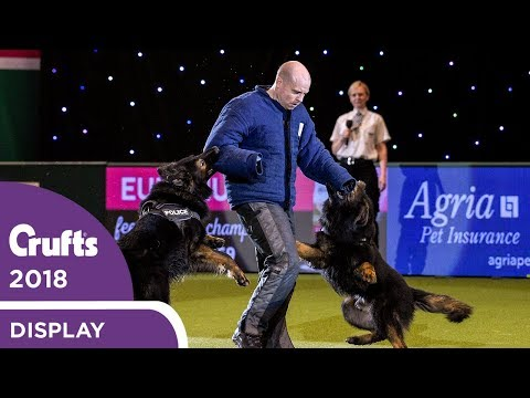 West Midlands Police Dog Display | Crufts 2018