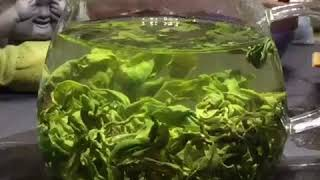 Emerald Green Tea / Gui Zhou Green Tea