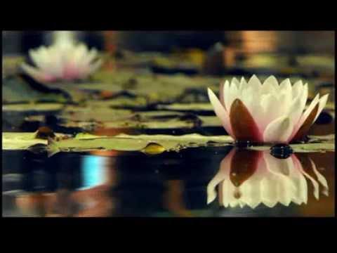 Teratai Layu Di Tasik Madu (Versi Lelaki)  - Fauziah Latiff