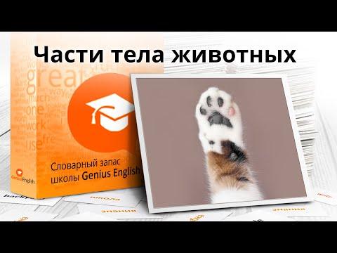 """Тема: """"Части тела животных """" - Словарный запас школы GeniusEnglish"""