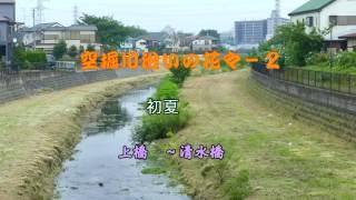 [4K]空堀川沿いの花々-2/初夏 上橋~清水橋