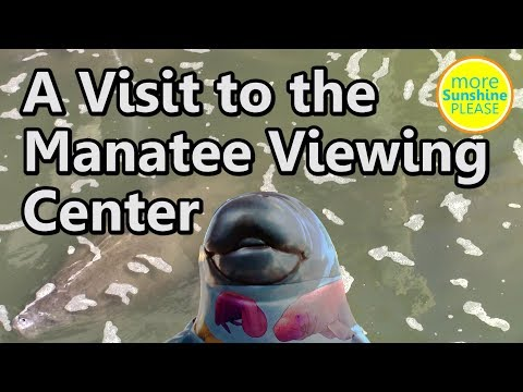 A Visit to the Manatee Viewing Center in Apollo Beach, Florida - vlog