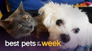 Cat & Dog BFFs | Best Pets of the Week