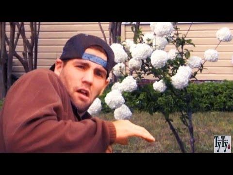 *Plant Japanese Snowball Trees* +Viburnum Plicatum+White Flower+