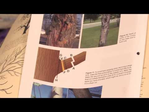 Gardening: Pruning : How to Prune Dwarf Fruit Trees
