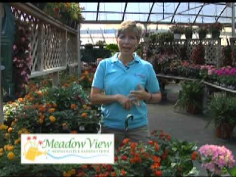 How Often Should I Water My Plants Meadow View Greenhouse And Garden 1 Youtube