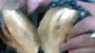 La cirujia :Z del Pepino Juanito