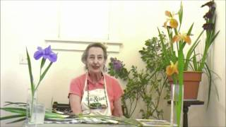 Growing Louisiana Irises