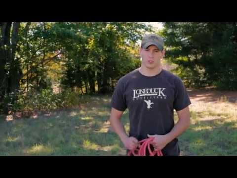 Gun Dog Training - Heel Work