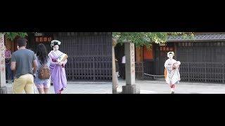 京都 祇園白川の紫陽花 2019年 hydrangea at  Gion-Shirakawa, Kyoto
