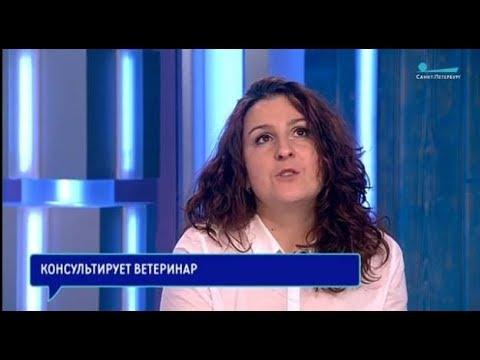 Мария Воробьева на Телеканале Санкт-Петербург ч. 2 — запись от 01.03