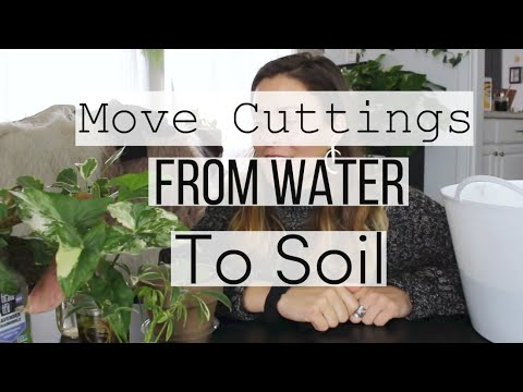 How to Move Cuttings From Water to Soil | Move Houseplants From Water to Soil!