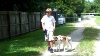 Brace Obedience With Connor Age 11 Dogtra E Collar Pager